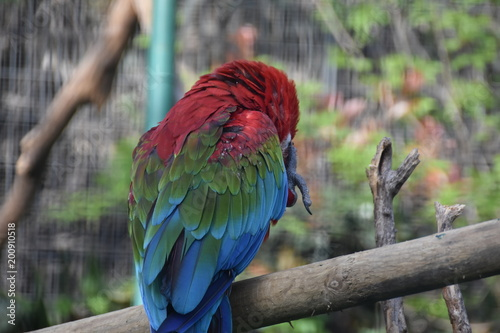 Foto Murales Parrot