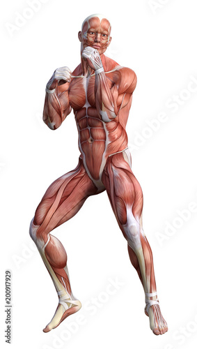 3D renderowania męskiej anatomii rysunek na białym tle