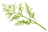 fresh dill weed isolated on white - 200925173
