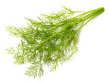 fresh dill weed isolated on white - 200925310