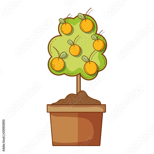 orange tree with leaves and stalk inside flowerpot