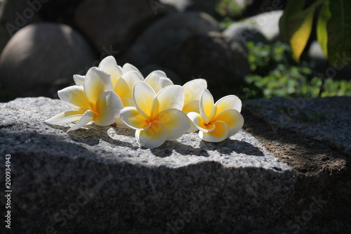 Aluminium Plumeria photo of a frangipani on a stone 6
