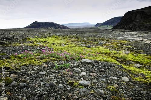 Zielony krajobraz w Islandii