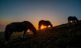 horse grazing in the mountains at sunset - 200957393
