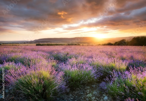 Lavender in the mountain valley during sunset. Beautiful natural landscape in the summer time - 200962701