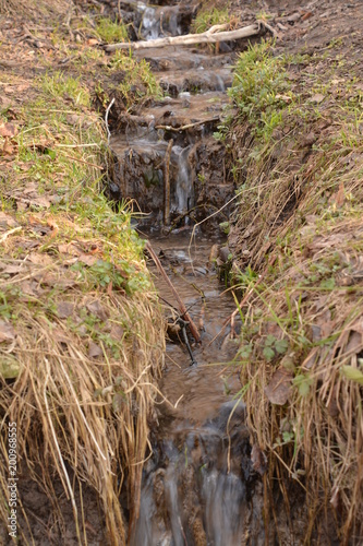 flora fauna  animals birds duck squirrel redhead tail fluffy tree Bush Park Creek pathway grass leaves fresh air pond alley spring autumn nature forest water - 200968555