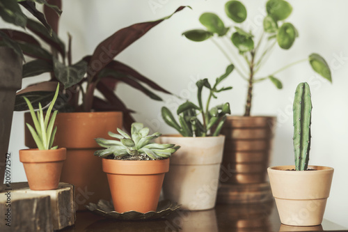 Close up of plant composition in differents design pots on the brown vintage shelf. The stylish and modern home interior.