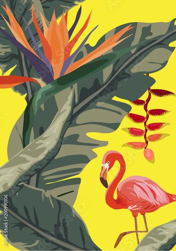Tropikalna dżungla rainforest zasadza kwiaty, flaming, tukanu rabatowy tło
