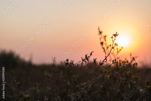 Plexiglas Zomer Beautiful sunset in a field with wild herbs