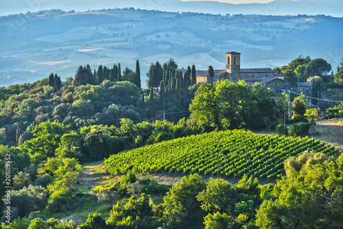 Fotobehang Wijngaard Vineyard near the city of Montalcino, Tuscany, Italy