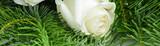 Blumen 905 - 201024367
