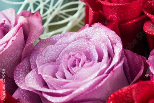 flowers roses red macro