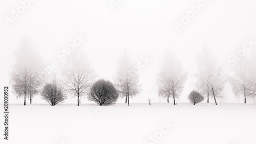 Tranquil scene of birches in winter morning fog - 201030952
