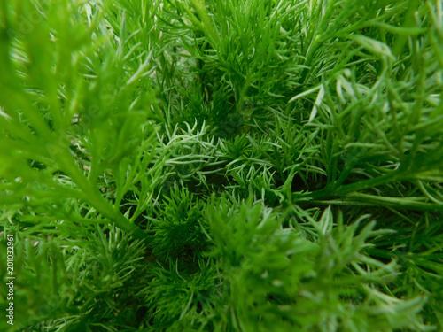 grass tree - 201032961
