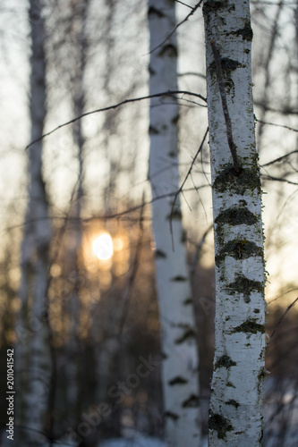 Foto op Plexiglas Grijs Sunset through the branches of trees in the forest