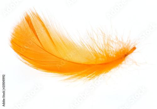 Piękny pomarańcze piórko na białym tle