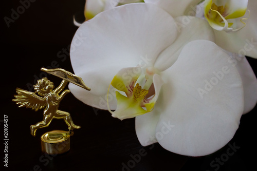 Orchid and Cupid  - 201054517