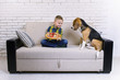cute boy and funny beagle dog eating pizza