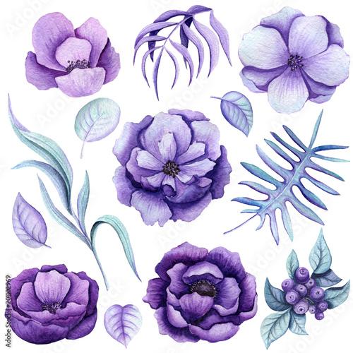 Botanical Set of Watercolor Purple Flowers