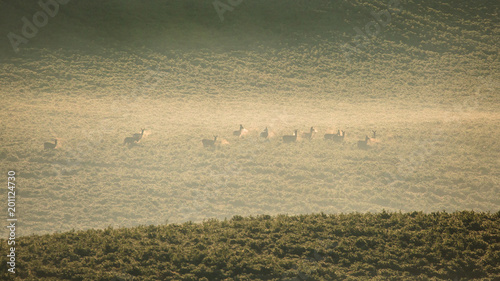 spring landscape with deers on the hills in rural area Moravia, Czech republic