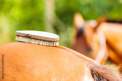 Plexiglas Paarden Person taking care of horse, brushing grooming animal
