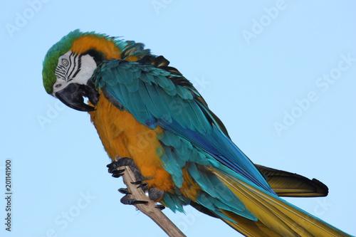 Plexiglas Papegaai perroquet