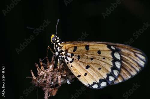 closeup shot of butterfly in nature - 201149963