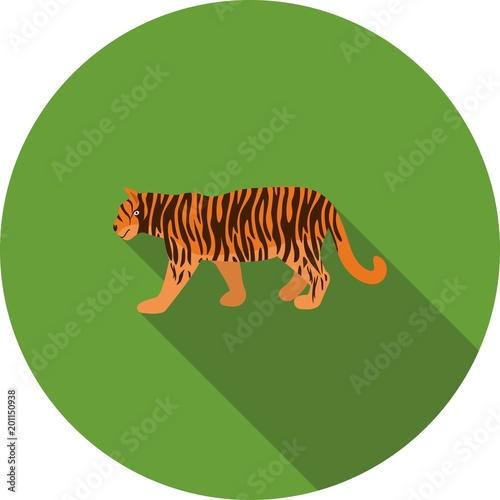 Tygrys, zwierzę, młode