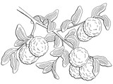 Bergamot fruit graphic branch black white isolated sketch illustration vector - 201162169