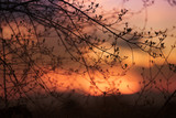 Silhouettes of branches of a tree in the gold colored sunset. - 201171323