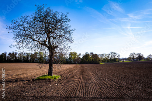 Foto op Aluminium Cappuccino Isolated tree in a field at sunset