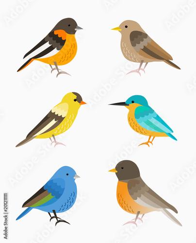 Set of small birds isolated on white background, flat illustration