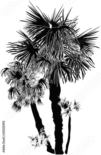 silhouette of palm trees group isolated on white - 201212903