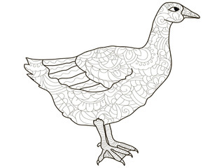 Adult antistress coloring bird, duck, goose pattern, astrakhan. Illustration of black lines doodle, white background