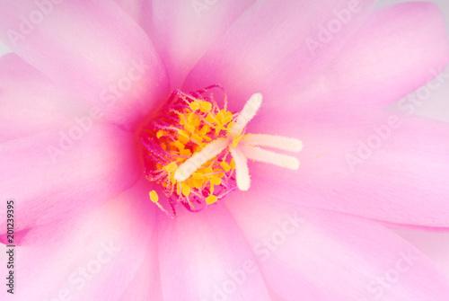pink cactus flower - 201239395