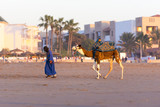 Camel for tourists in Agadir Morocco