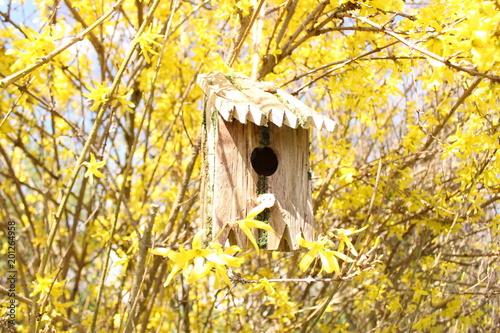 Leinwandbild Motiv Vogelhaus in einer Forsythie