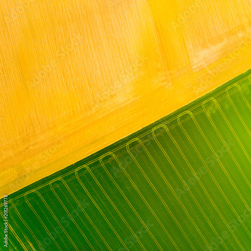 Aluminium Oranje Aerial view to green and brown fields with tractor tracks. Agricultural landscape from above.