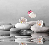 flower and stone zen spa on water surface and grey background