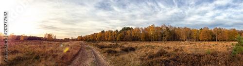 Panorama wrzosowiska