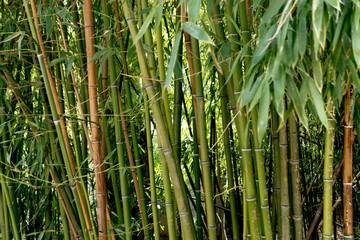 Bamboo © andreymuravin