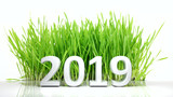 New year 2019 Digits and green grass isolated on white background. 3d illustration