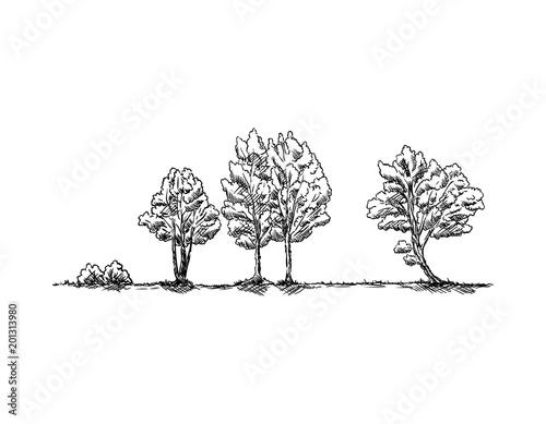 drzewa w krajobrazie