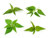 Nettle set isolated on white background - 201328952