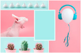 Fashion collage. Colorful Cactus set, Sphynx cat, meringue in row, white balloon and headphones on Pink and mint background. Trendy Vanilla Colors. Copy space.
