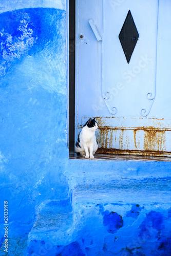 Plexiglas Marokko Chefchaouen, la perle bleue du Maroc et son chat