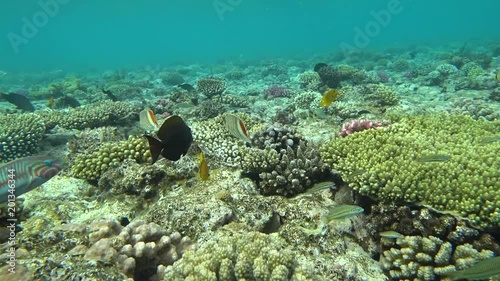 Underwater Colorful Tropical Fishes and Beautiful Corals.