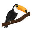 beauty toucan bird animal in the branch