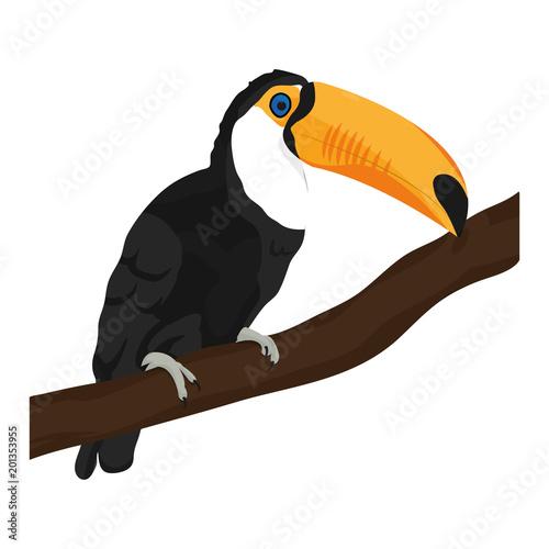 beauty toucan bird animal in the branch
