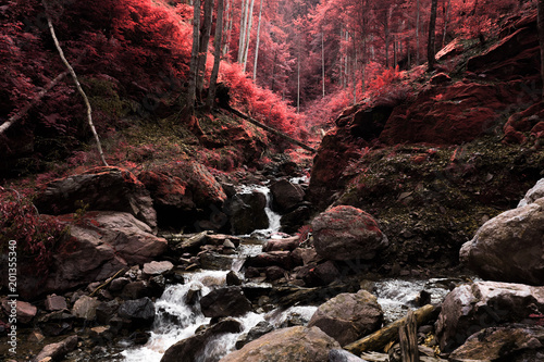 infrared forest river - 201355340